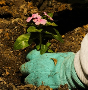 planting-109014_640
